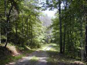 backwoodswalk UT Arboretum