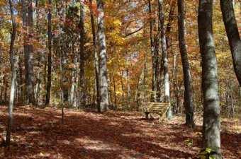 oakridgeforest14
